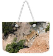 Young Auodad Sheep Descending The Canyon Weekender Tote Bag