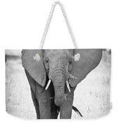 Young Bull Elephant Weekender Tote Bag