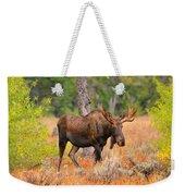 Young Bull Moose Weekender Tote Bag