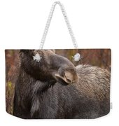 Young Bull Moose Weekender Tote Bag