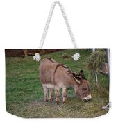 Young Donkey Eating Weekender Tote Bag