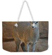 Young Female Klipspringer Weekender Tote Bag