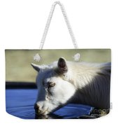 Young Goat Weekender Tote Bag