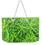 Young Goldenrod Before Blossoms Weekender Tote Bag