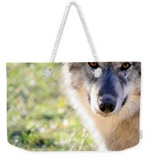 Young Gray Wolf In Light Weekender Tote Bag