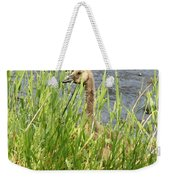 Young Grazing Goose Weekender Tote Bag