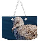 Young Herring Gull Weekender Tote Bag