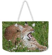 Young Lynx Yawning Weekender Tote Bag