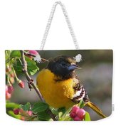 Young Male Oriole Weekender Tote Bag