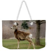Young Mule Deer Weekender Tote Bag