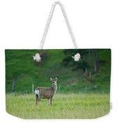 Young Mule Deer Weekender Tote Bag