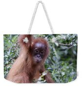 Young Orangutan Kiss Weekender Tote Bag