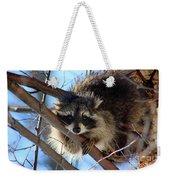 Young Raccoon In Birch Tree Weekender Tote Bag