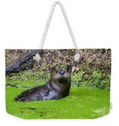 Young River Otter Egan's Creek Greenway Florida Weekender Tote Bag
