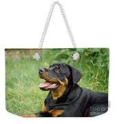 Young Rottweiler Weekender Tote Bag