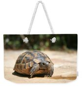 Young Tortoise Emerging From Its Shell Weekender Tote Bag