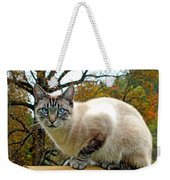 Zing The Cat In The Fall Weekender Tote Bag