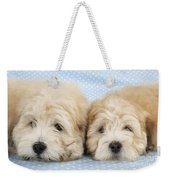Zuchon Teddy Bear Dogs, Lying Weekender Tote Bag