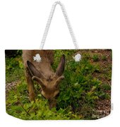 A Young Buck Grazing Weekender Tote Bag