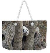 A Baby Panda Plays On A Branch Weekender Tote Bag
