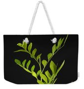 A Coffee Plant Coffea Arabica Weekender Tote Bag
