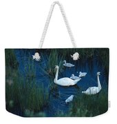 A Family Of Trumpeter Swans Swims Weekender Tote Bag