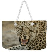A Female Leopard, Panthera Pardus Weekender Tote Bag