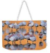A Flock Of Migratory Flamingos Roost Weekender Tote Bag