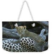 A Leopard  Cub, Panthera Pardus Weekender Tote Bag