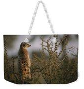 A Meerkat Suricata Suricatta Stands Weekender Tote Bag