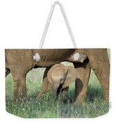 African Elephant Loxodonta Africana Weekender Tote Bag