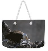 An American Bald Eagle And Chick Weekender Tote Bag