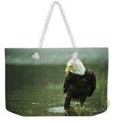 An American Bald Eagle Stares Intently Weekender Tote Bag