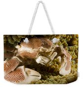Anemone Or Porcelain Crab In Its Host Weekender Tote Bag