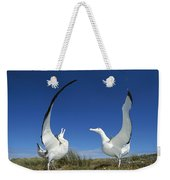 Antipodean Albatross Diomedea Weekender Tote Bag