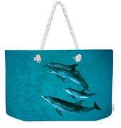 Atlantic Spotted Dolphins Weekender Tote Bag