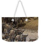 Blue Wildebeest Connochaetes Taurinus Weekender Tote Bag