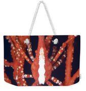 Bright Red Crab On Fan Coral, Papua New Weekender Tote Bag