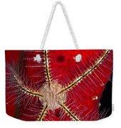 Brittle Star On Sponge, Belize Weekender Tote Bag