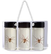 Brown Recluse Spider Weekender Tote Bag