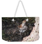 Brown Thrasher Weekender Tote Bag