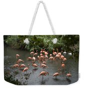 Caribbean Flamingos At The Zoo Weekender Tote Bag