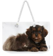 Cavapoo Pup And Shaggy Guinea Pig Weekender Tote Bag