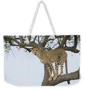 Cheetah Acinonyx Jubatus Female Weekender Tote Bag