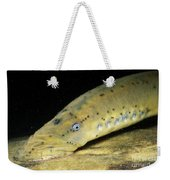 Chestnut Lamprey Weekender Tote Bag