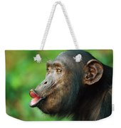 Chimpanzee Pan Troglodytes Adult Female Weekender Tote Bag
