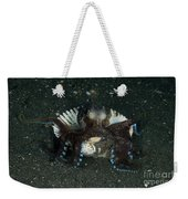 Coconut Octopus In Shell, North Weekender Tote Bag