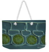 Conjugation In Spirogyra Algae Lm Weekender Tote Bag