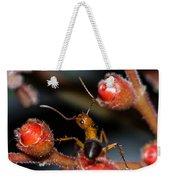 Curious Ant Weekender Tote Bag