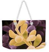 Curvularia Geniculata Weekender Tote Bag